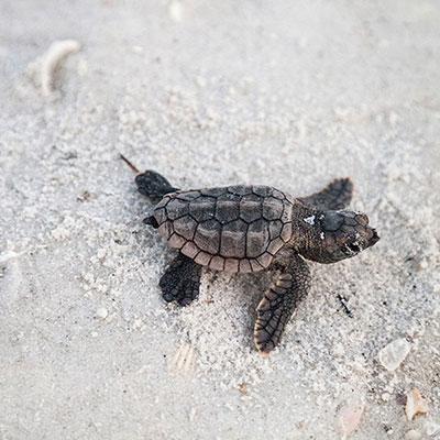 turtles-02